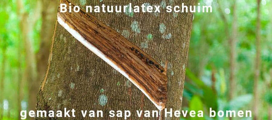 Afbeelding van natuurlijk latex schuim sap van bomen